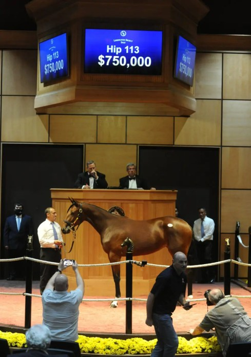 Adam Ström Hip 113 Mandrill, a Chapter Seven full-sister to Gimpanzee, was the second highest yearling sold. Marcus Melander purchased the trotter from the Concord Stud consignment on behalf of Gimpanzee's part-owner SRF Stable for $750,000.