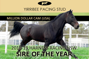 Million Dollar CAM USA standing at Yirribee Pacing Stud Australia
