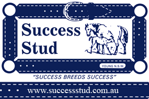 success-stud-young-nsw
