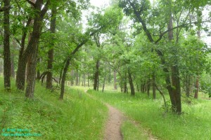 Black Hills Hiking