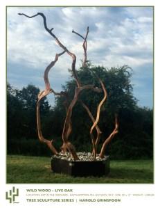 Wild Wood - Live Oak