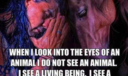 When I look into the eyes of an animal