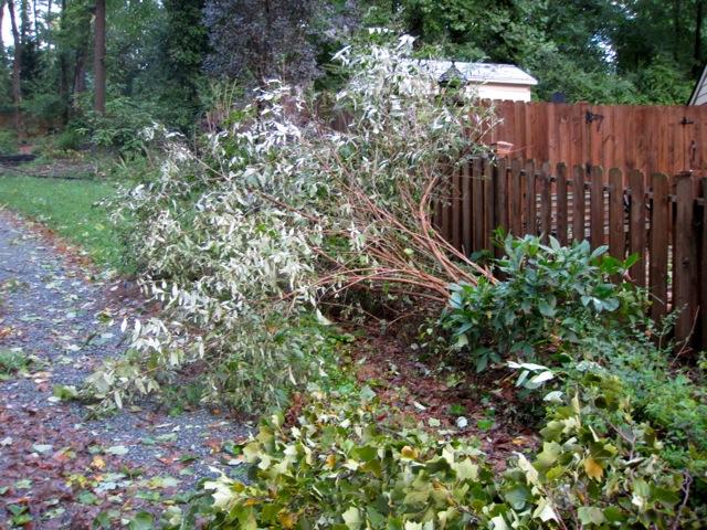 Hurricane Irene: The View from Richmond, VA (4/6)