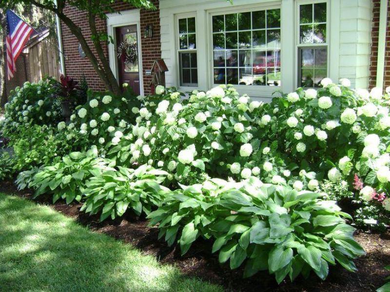 Front Yard Landscaping Ideas Lush Hydrangeas and Hostas - harpmagazine