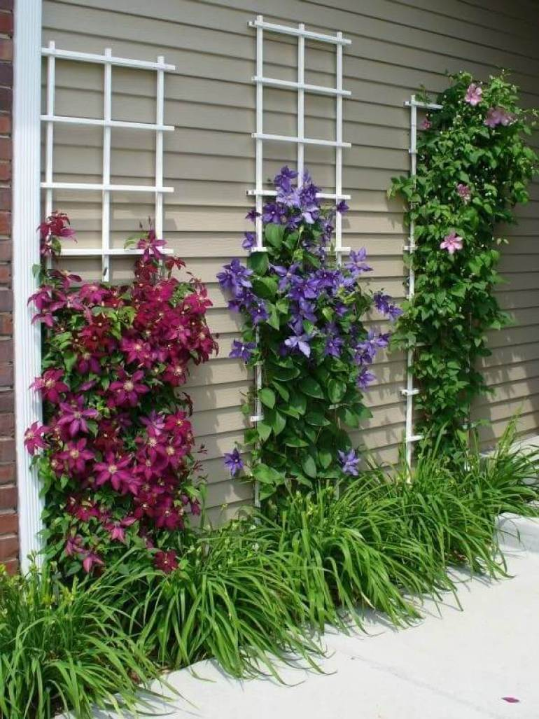 Front Yard Landscaping Ideas: Clematis Climbing Wall -harpmagazine-com