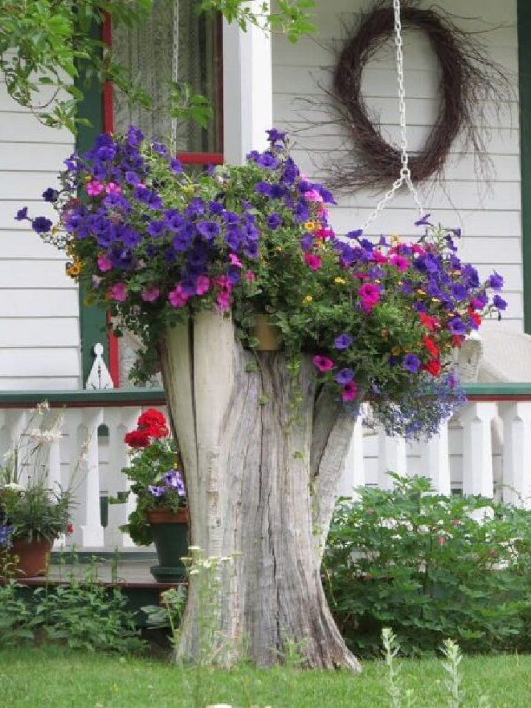 Growing Stump Front Yard Landscaping Ideas