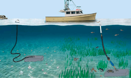 'Conservation moorings' could be a lifeline for eelgrass