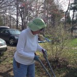 Ann Standridge tackles some pruning at Centennial Hall garden clean up, May, 2015.