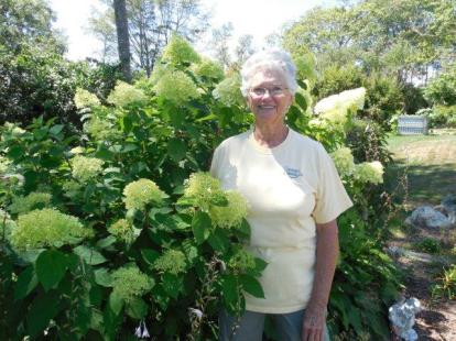 Pat with her limelight hydrangea.