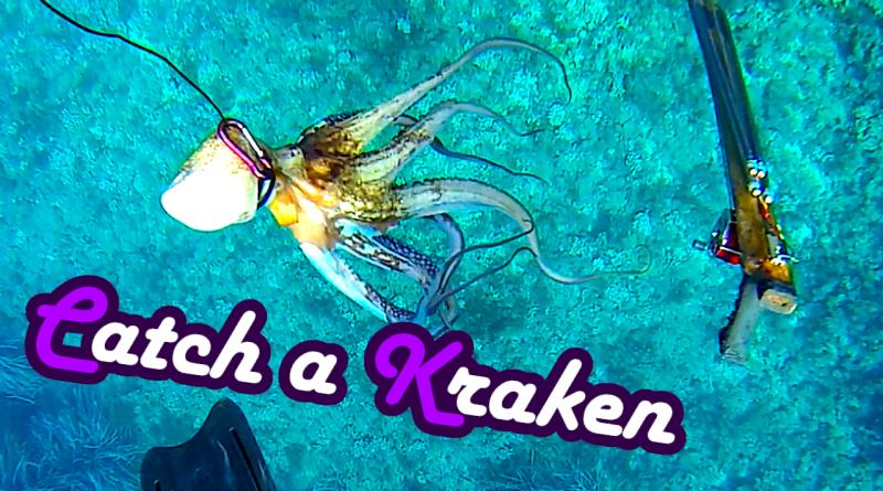octopus Oktopus fangen catch and cook kill töten ausnehmen zubereiten recipe Polpo Polpi Anleitung Rezept Tutorial Guide Oktopuss Tintenfisch Sepia