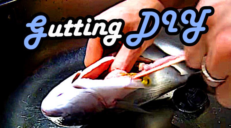 Gut gill fish diy tutorial gutting ausnehmen fisch fische gedärme säubern cleaning putzen schuppen