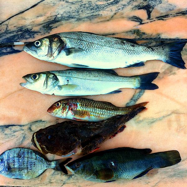 Spearfishing Sea bass wolfsbarsch Fischen Europe Europa Tutorial Guide Spots harpunieren laws restrictions guide tutorial