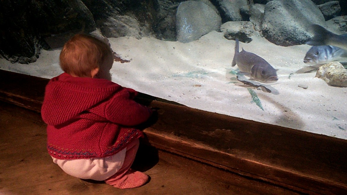 Blue Reef Aquarium, Newquay