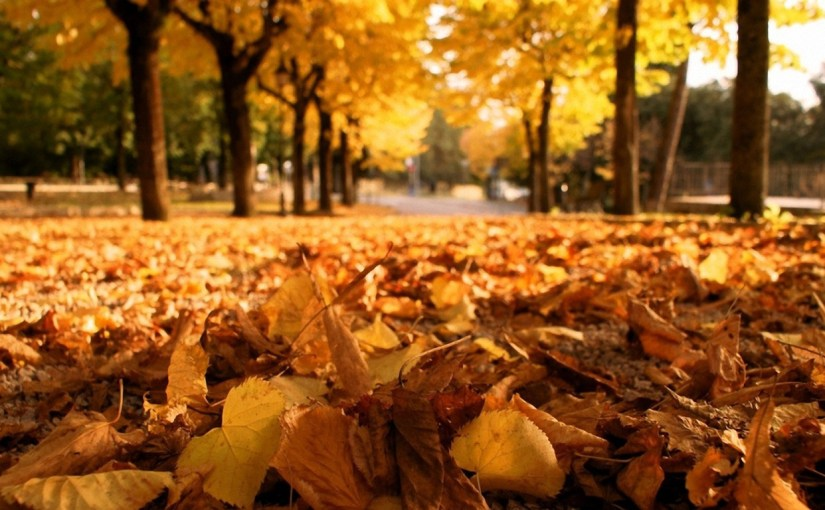 conflict in falling leaves 5 tools for building conflict in your novel by:  while the nops are falling in love with their  make the reader wait a little longer before he leaves the bank.