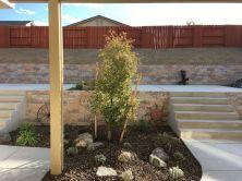 harris-landscape-construction-reno-tree-plant-installation