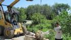10-Large tree planting (4)