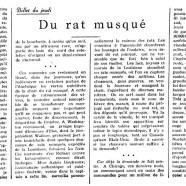 «Du rat musqué»