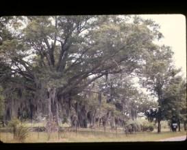 Tree Under Moss