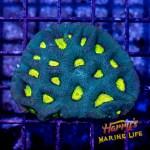HML Nuclear Aquaman Favia *SALE*