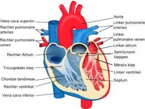 Hartklep aandoeningen