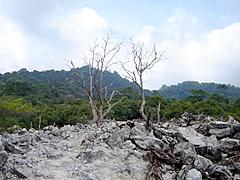 Pepohonan meranggas