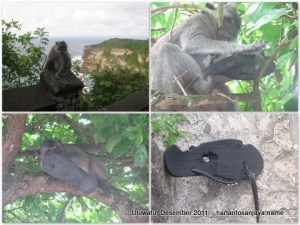 Aktivitas monyet di Uluwatu.