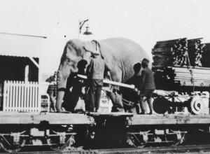 Elephant on a circus train
