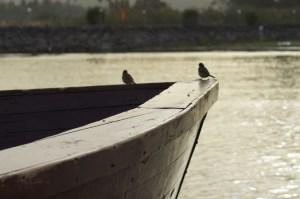 Two Birds on the Sea of Galilee (2012) Photo by LaShawnda Jones