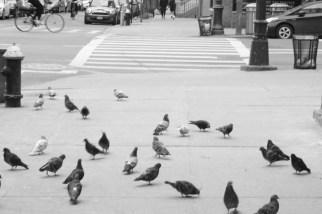 Congregation on a corner