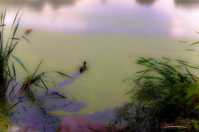 Photo: @Spirit-Harvest.com |Morning on Harlem Meer 2