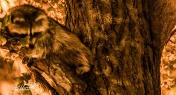 2014 Photo Challenge, Week 51: Nature & Wildlife - Mammals
