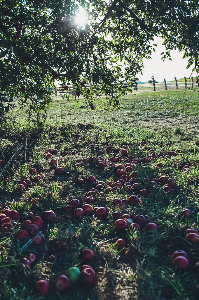Indiana Apple Orchard