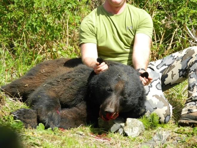 Vancouver Island Bear Boar