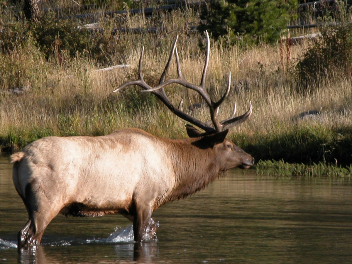 Randy Newberg Elk Talk: Finding Early Season Elk