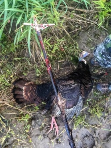 Bowhunting for Turkeys