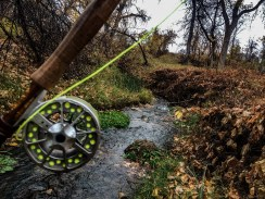 Nebraska Brook trout Stream