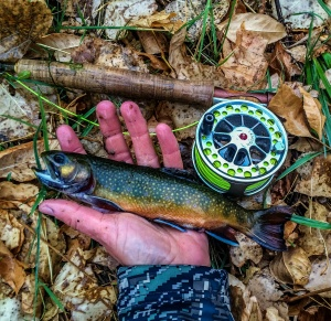 Nebraska Brook Trout