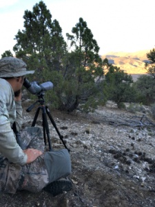 Glassing for Elk in Nevada