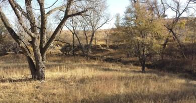 A Wish Fulfilled: Mule Deer Hunting in Kansas