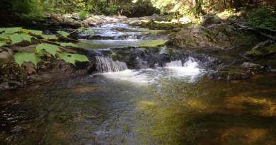 Return to the Mountains: Fly Fishing for Brook Trout