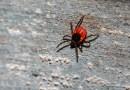 Lyme Disease: Still a Growing Problem