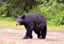 No Fall Bear Hunting in New Jersey