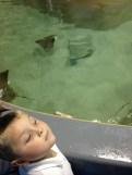 Son before feeding the manatees.