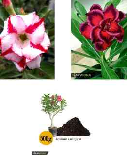 , The Diwali Price Drop Sale!, Harvyora