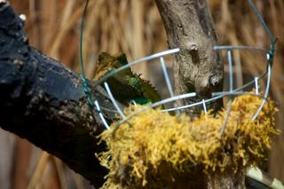 Bild: Reptilien im Kleinen Tropenhaus des Zoos von Aschersleben.