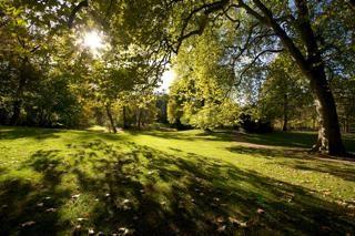 Bild: Alte Bäume im Nordteil des Schlossparks zu Ballenstedt.
