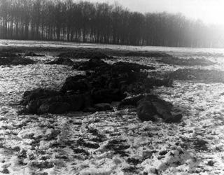 ild: Gefallene deutsche Soldaten, 1. Weihnachtsfeiertag 1944, bei Bastogne. Das Bild ist gemeinfrei, da es von einem Beamten oder Angestellten einer US-amerikanischen Regierungsbehörde in Ausübung seiner dienstlichen Pflichten erstellt wurde.