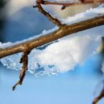 Verschneiter Ast am Weg zum Jagdschloss Röhrkopf