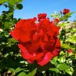 Bild: Blütenpracht an der Wasserburg Zilly.