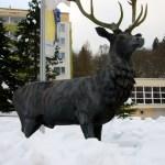 Bild: Winter 2010/2011 - Hirsch in Alexisbad im Harz.